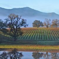 Vineyard Ancient Peaks