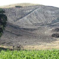 Deforestation by Justin Vineyards