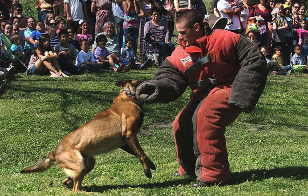 "Kings County Deputy Sheriff Alex Geiger and ""Boss"" with a demonstration at Hidden Valley Park in Hanford, California in 2013."